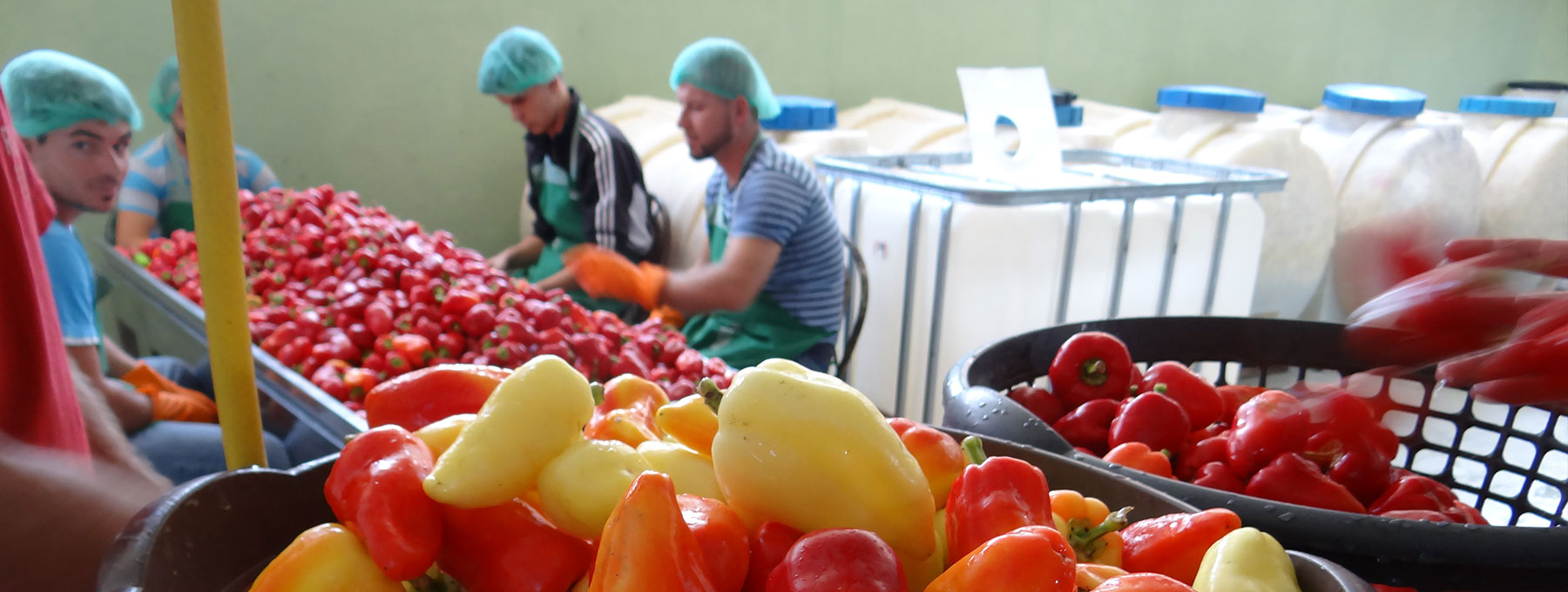 Boosting Domestic Vegetable Production and Processing